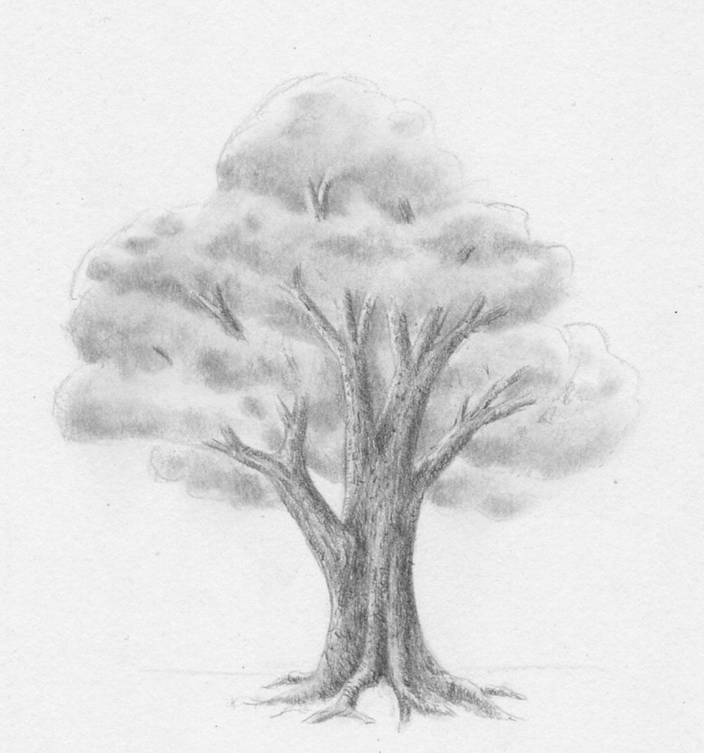 Laub Baum Zeichnen Lernen Zeichenkurs