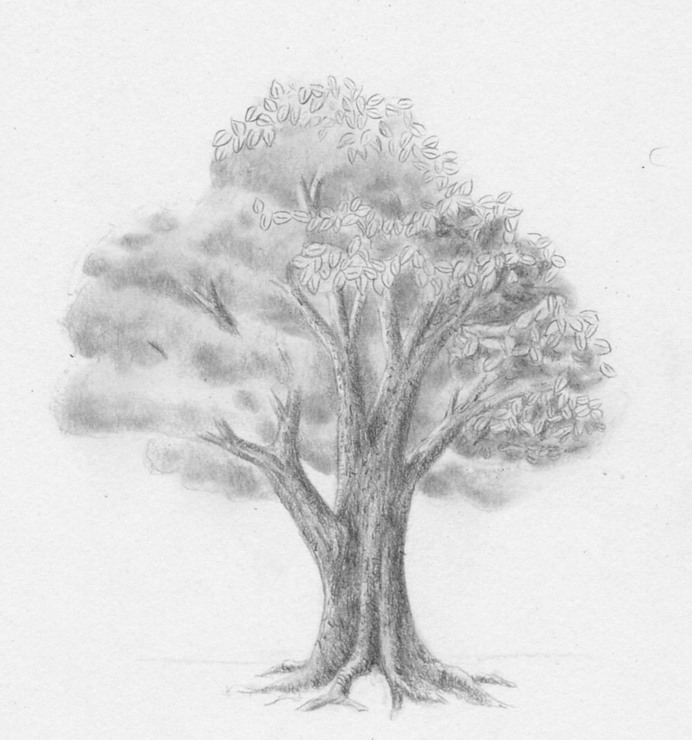 laub - baum - zeichnen lernen - zeichenkurs