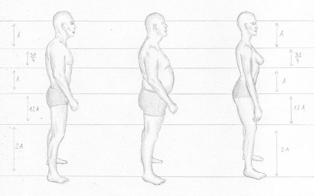 Menschen Zeichnen Proportionen Mann Und Frau Zeichenkurs