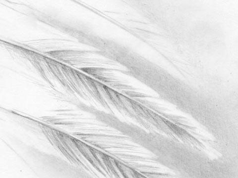 lerne einen sexy engel mit fl geln zu zeichnen. Black Bedroom Furniture Sets. Home Design Ideas