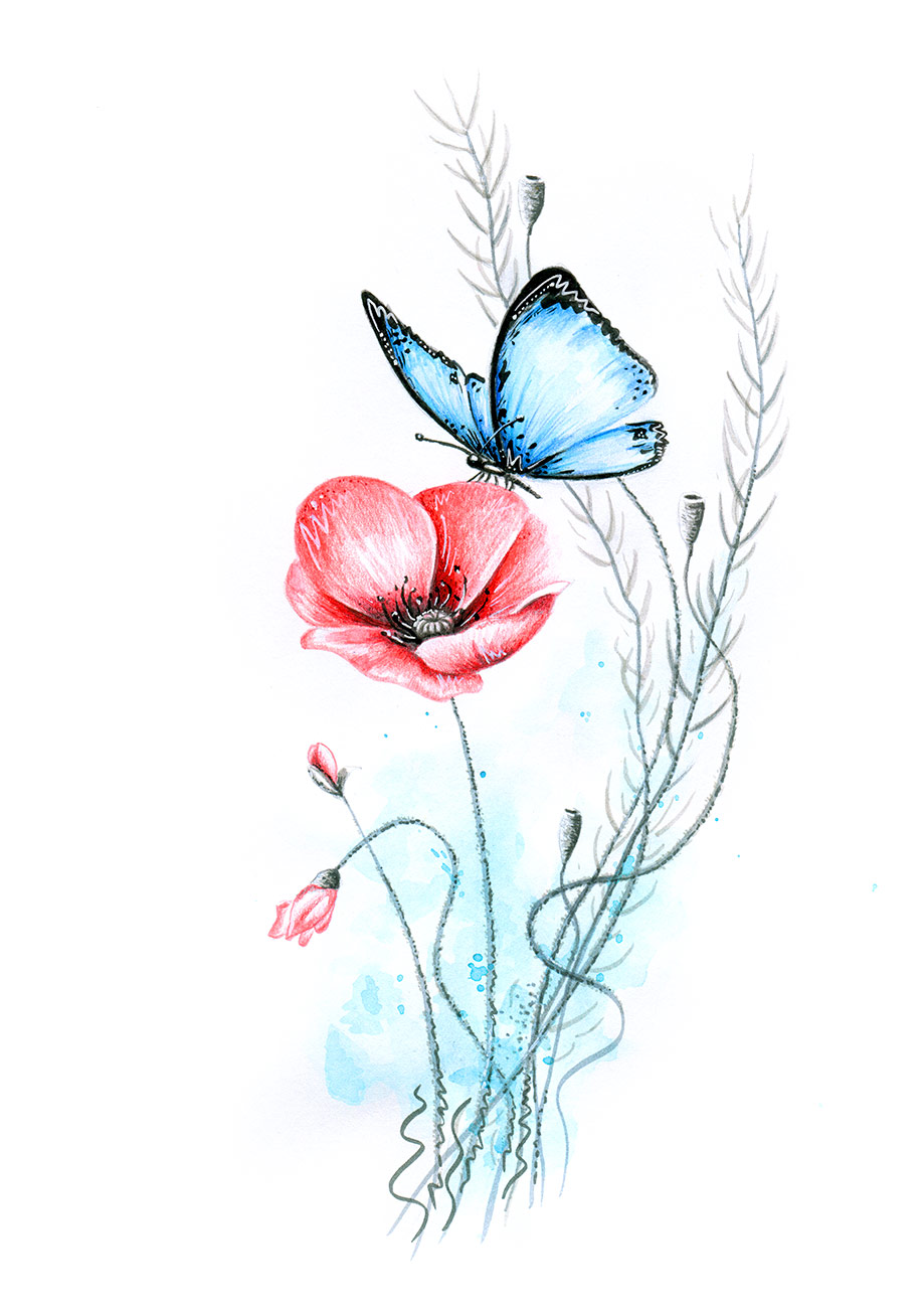 Wasserfarbe Mohnblume Und Schmetterling